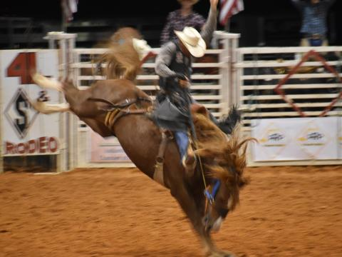 Competing at the Indiantown Rodeo in Florida